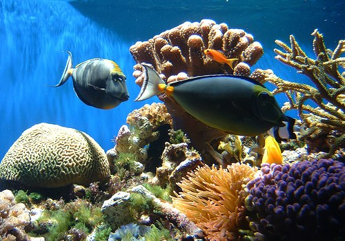 coral-reef-only_point_five