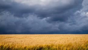 storm-over-wheatfield-monsanto-by-anguskirk