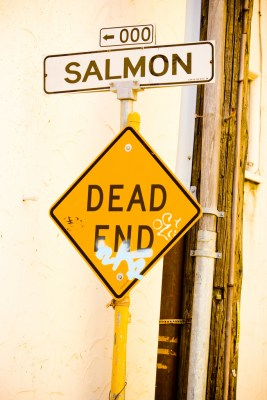 salmon dead end