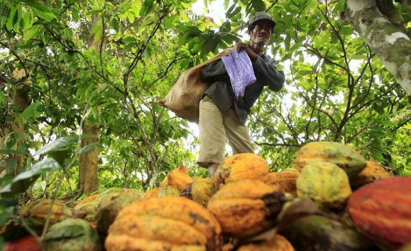 Cocoa farmer in Indonesia. Source: World Agroforestry Centre