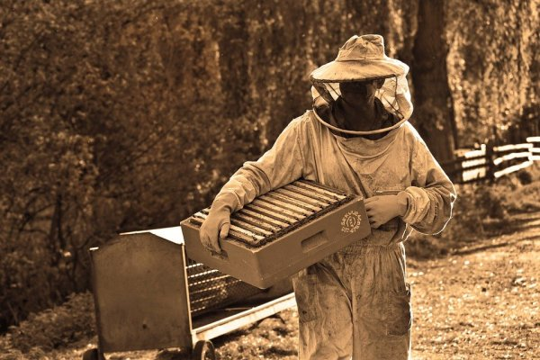 displaced coal workers have new jobs as beekeepers