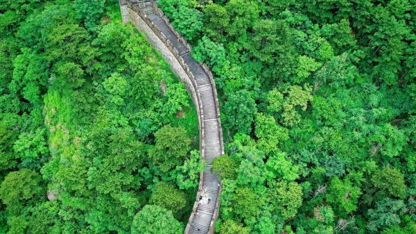 China leads the world in reforestation efforts
