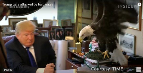 Donald Trump vs Bald eagle