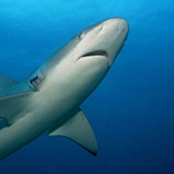Common Misconceptions about the Ocean from NOAA - sharks
