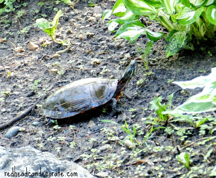 Turtle South East Michigan
