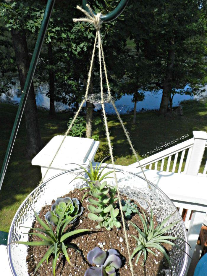 Easy Outdoor Succulent Farm
