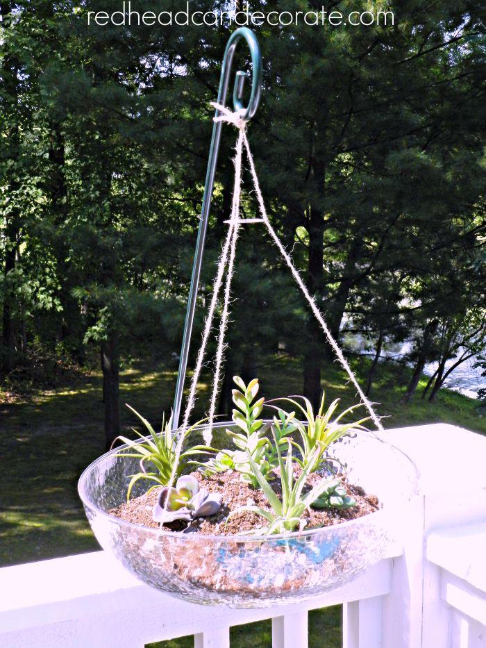 Outdoor Succulents