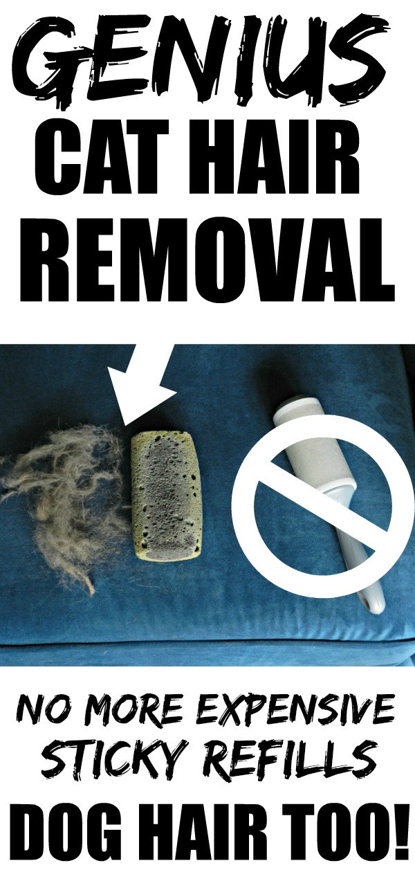 This Removing Cat Hair Trick totally works! It's just a rock, but my photos prove it, and it's very affordable. It even works on rugs!