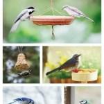 Host a Buffet for the Birds