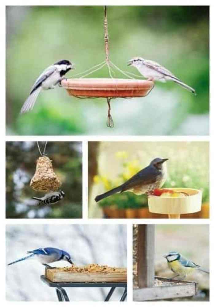 bird buffet multi