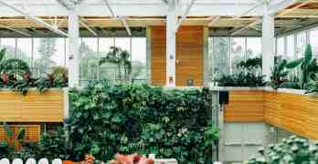 Greenhouse Care For The Winter