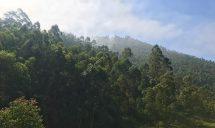 Muraho Redhead In Rwanda