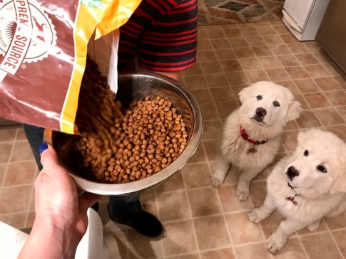 Supreme Source Dog Food #SuperFoodSwitch #dog #blogger #blog #IC #ad