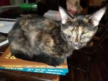 homeschool cat