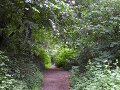 Tow Path Canopy June 2013