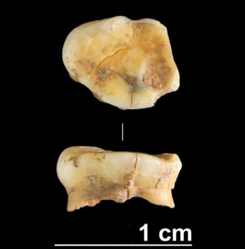fosil mas antiguo galicia