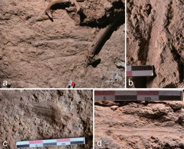 Restos fosilizados de las flores en las tumbas de 12.000 años