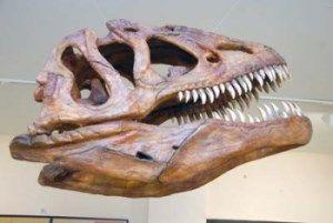 mandibula dinosaurio
