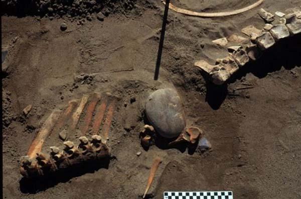 Los pobladores de Norteamérica cazaron caballos y camellos hace 13.300 años.