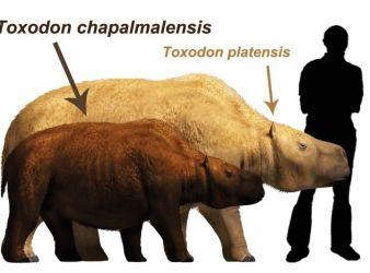 Toxodon chapalmalensis