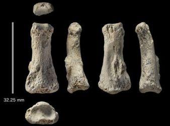 fosil homo sapiens mas antiguo de asia