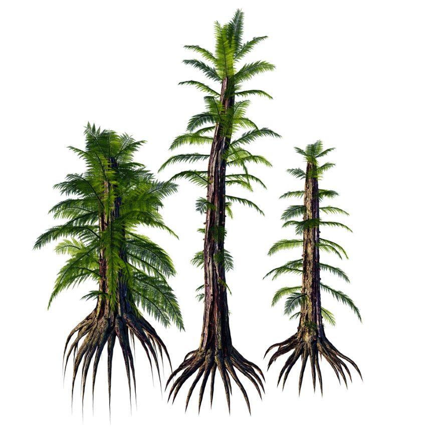 Tempskya flora mesozoico