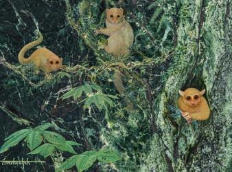nuevos primates fosiles
