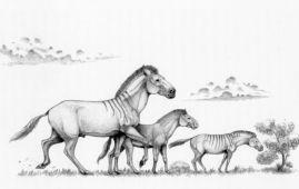 caballos enanos hiparion
