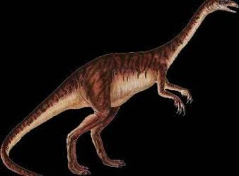 ammosaurus dinosaurio