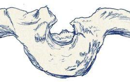 craneo amtosaurus