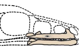 dibujo del archaeornithoides