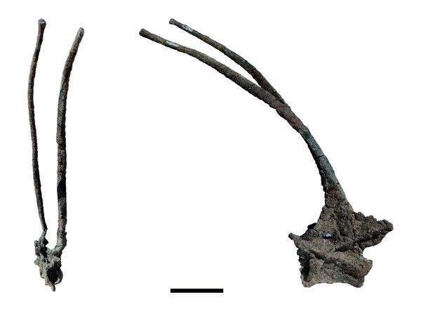 vertebra cuello bajadasauro