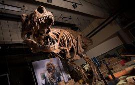 tyrannosaurus rex mas grande del mundo