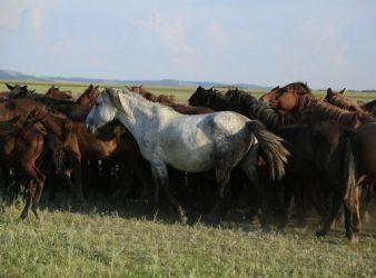 caballos domesticados