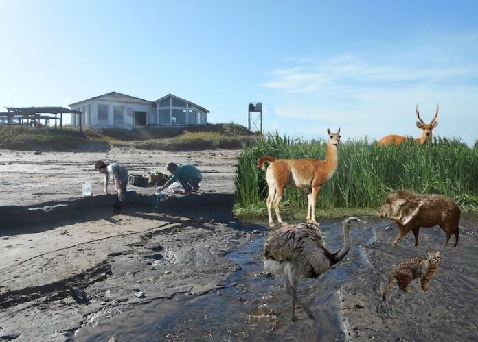 animales yacimiento miramar argentina