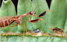 insecto ambar teruel