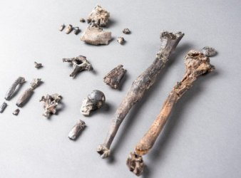 origen del bipedismo en danuvius guggenmosi