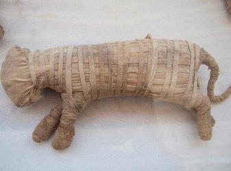 momia leon cachorro egipto