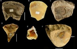 herramientas neandertal conchas marinas