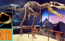 tyrannosaurus rex juvenil
