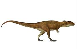 Carcharodontosaurus dinosaurio