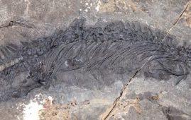 fosil de talatosaurus alaska