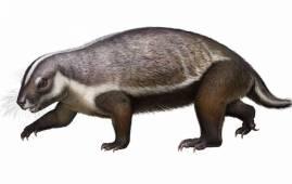 evolucion mamiferos mesozoico