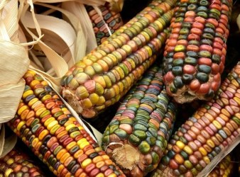 maiz mesoamerica culturas