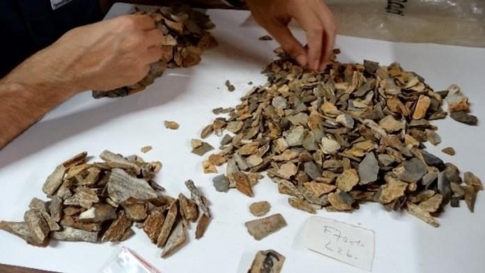 restos neandertales La Ferrassie 8