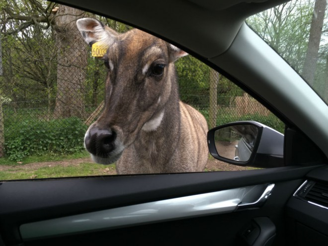 west midland safari park review, safari parks kids,