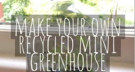 recycled bottle mini greenhouse, diy mini greenhouse, recycled gardening craft, plant craft, gardening kids