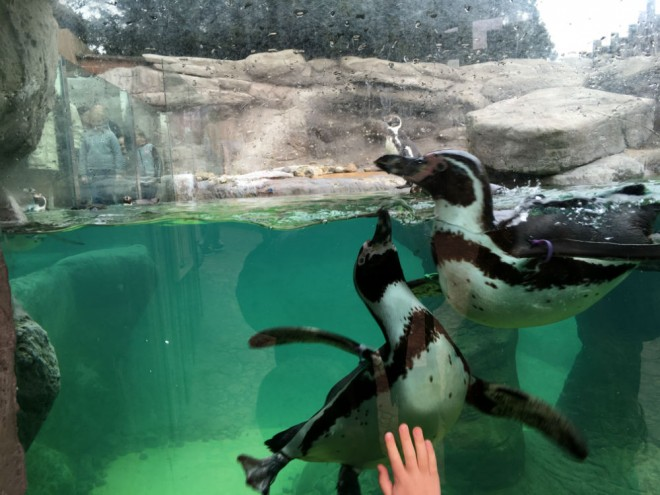 west midland safari park review, safari parks kids, penguins