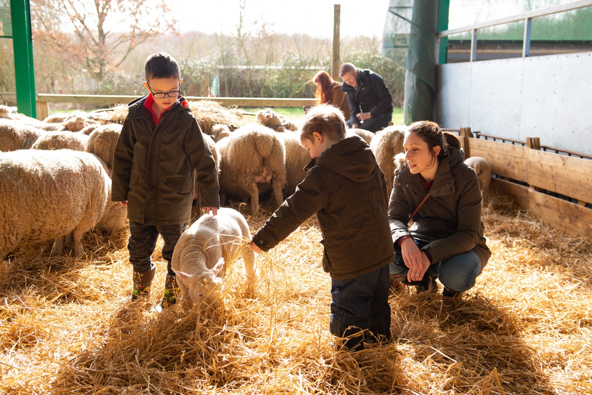 Roves Farm lambing, lambing days Swindon, where to feed lambs