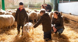 Roves Farm lambing, lambing days Swindon, where to feed lambs